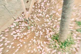 近くに珊瑚のアップの写真・画像素材[1832343]