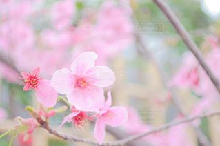 植物にピンクの花の写真・画像素材[1832432]