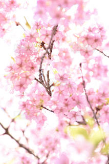 近くの花のアップの写真・画像素材[1847842]