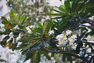 木からぶら下がって花の写真・画像素材[1856352]