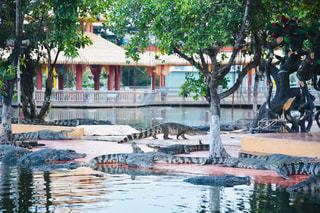 プールの水でカモメの群れの写真・画像素材[1856416]