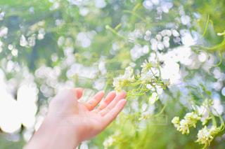 花を持っている手の写真・画像素材[1875912]