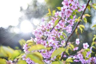 近くの花のアップの写真・画像素材[1875926]