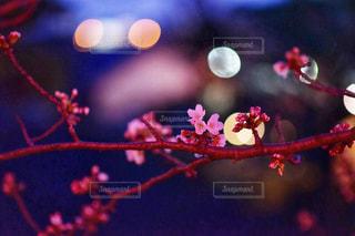 近くの花のアップの写真・画像素材[1875932]
