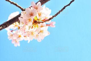 近くの花のアップの写真・画像素材[1875989]