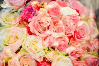 ピンクの花の花束の写真・画像素材[1884715]