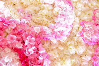 近くに皿の上のピンクと白ご飯のアップの写真・画像素材[1884720]