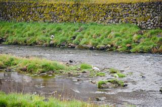 水域を流れる川の写真・画像素材[2276622]