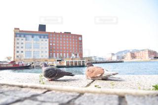 水域の上に座っている鳥の写真・画像素材[2280020]