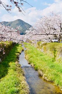 川の側に木がある小道の写真・画像素材[2280038]