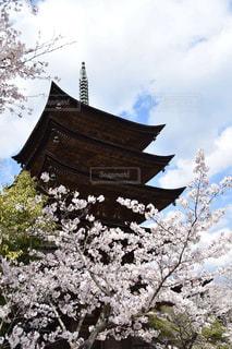 清水寺を背景にした木のクローズアップの写真・画像素材[2280045]