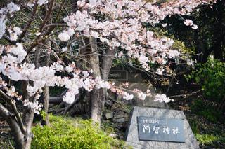花園のクローズアップの写真・画像素材[2280109]