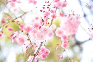 花のクローズアップの写真・画像素材[2280118]