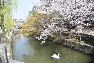 水で満たされた川の写真・画像素材[2280124]