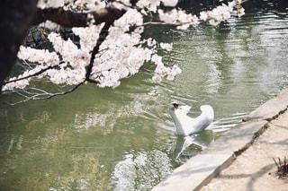 水のプールにカモメの群れの写真・画像素材[2280128]