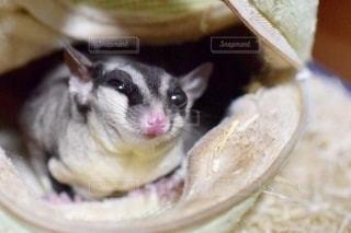 動物の写真・画像素材[2760141]