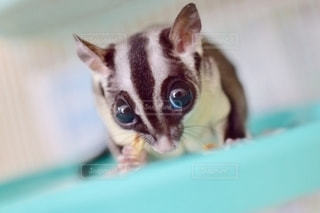 動物の写真・画像素材[2760151]
