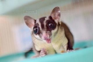 動物の写真・画像素材[2760155]