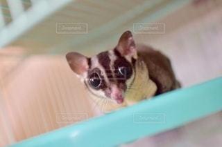 動物の写真・画像素材[2760161]