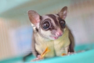 動物の写真・画像素材[2760172]