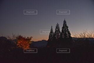 夕日が背景にある木の写真・画像素材[2775013]