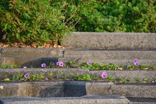 花畑のクローズアップの写真・画像素材[2782912]