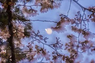 木のクローズアップの写真・画像素材[3088987]