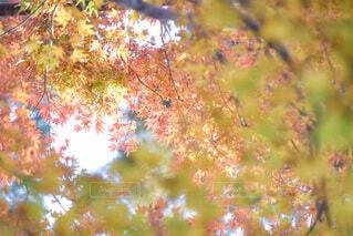 木のクローズアップの写真・画像素材[3713947]