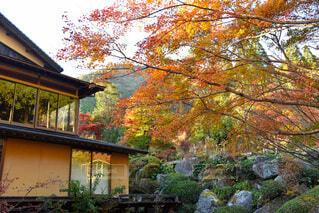 背景に木がある家の写真・画像素材[3713948]