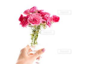 花のクローズアップの写真・画像素材[4165769]