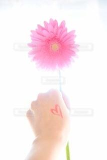 花のクローズアップの写真・画像素材[4165768]