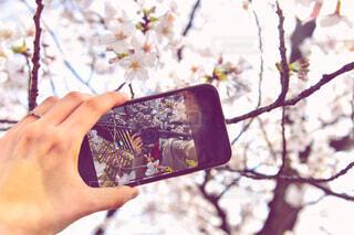 木を持つ手の写真・画像素材[4281029]