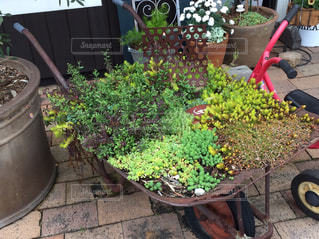 花,庭,アンティーク,ガーデニング,草花,イングリッシュガーデン,寄せ植え,多肉植物,三輪車