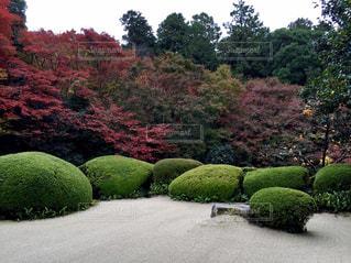 京都 詩仙堂の紅葉の写真・画像素材[849908]