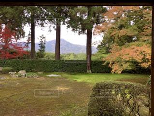 円通寺の庭園の写真・画像素材[849915]
