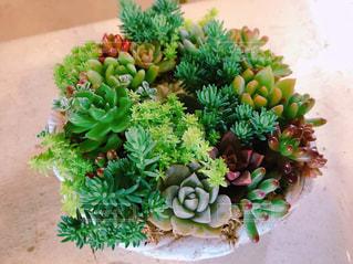 花,フラワーアレンジメント,寄せ植え,多肉植物