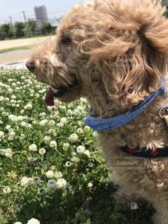 近くに犬のアップの写真・画像素材[1205036]