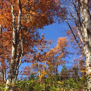 フォレスト内のツリーの写真・画像素材[1619211]