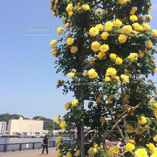 花のある暮らしの写真・画像素材[2141766]