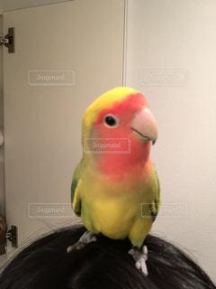 鳥 - No.638058