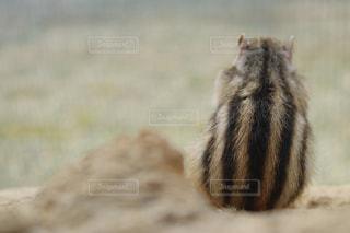 近くに動物のアップの写真・画像素材[722376]