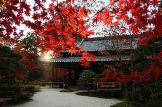 家の前に赤い葉の木 - No.842051