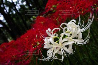近くの花のアップ - No.909167