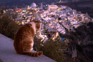 地面に座っている猫 - No.914642