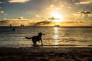 ビーチの上を歩く犬 - No.959213