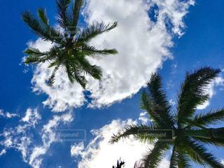 空の写真・画像素材[1096121]