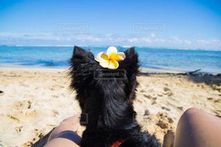 砂浜で座っている女性 - No.1194605