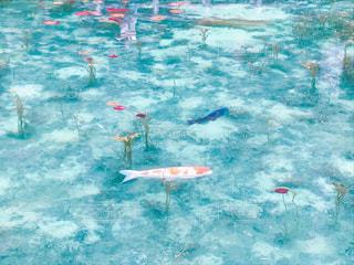 水のカラフルな水泳のグループの写真・画像素材[1015295]