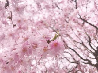 植物にピンクの花の写真・画像素材[1123929]