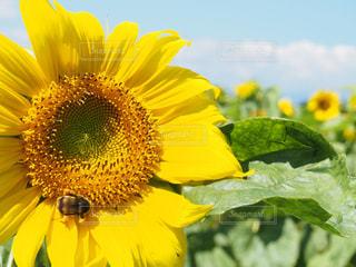 黄色の花の写真・画像素材[1123936]
